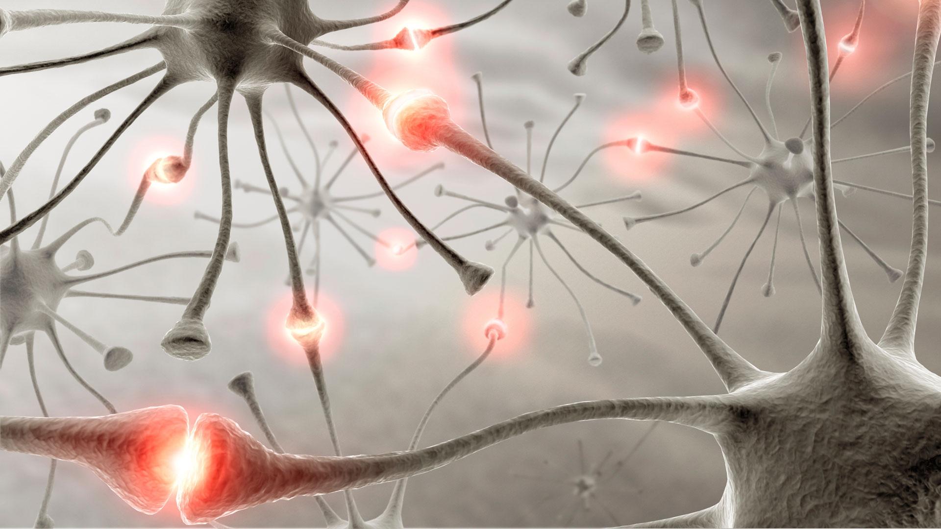 Resultado de imagen de conexion sinaptica neuronal