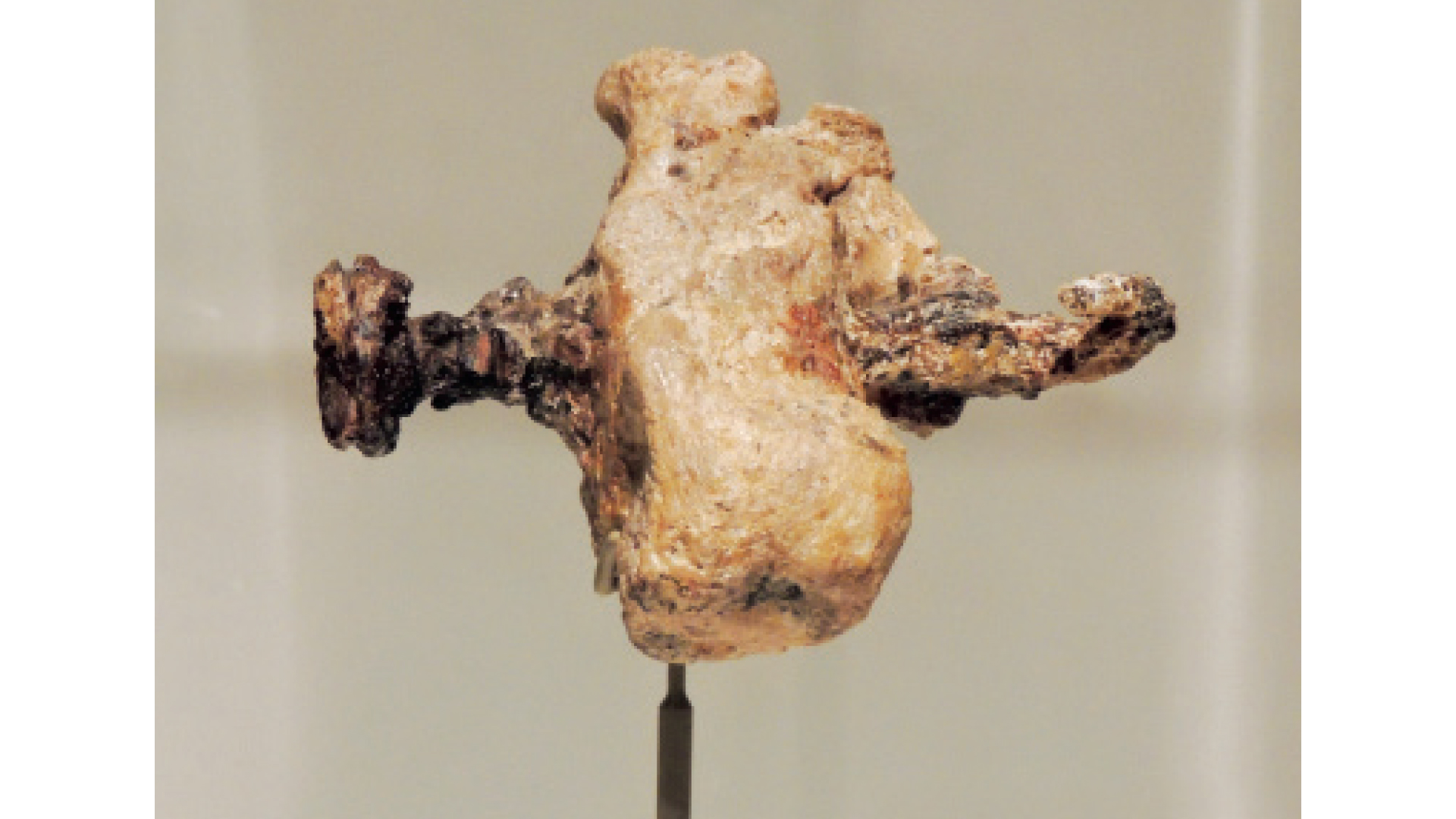 Heel bone of crucified first-century man, with embedded crucifixion nail